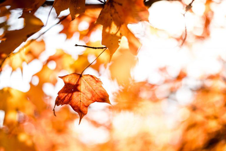 september leaves during fall